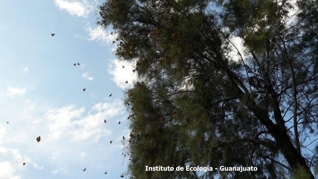 Monarch Butterfly Tags Found at Mexico Overwintering Sanctuary
