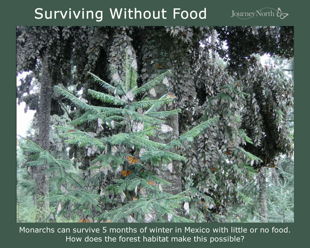 Journal: Surviving the Winter Without Food
