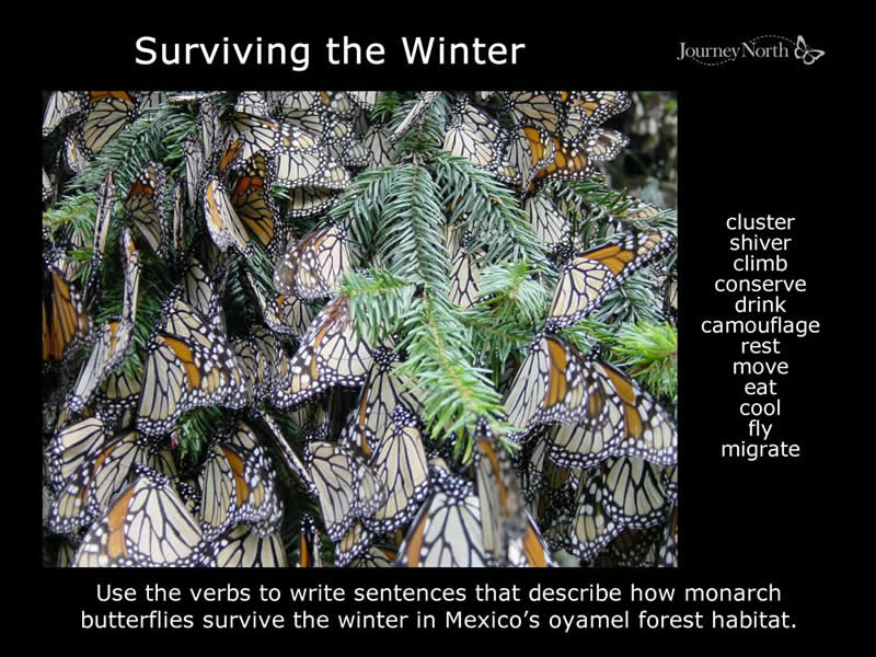 Journal Surviving the Winter
