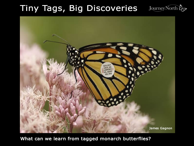 Tiny Tags Big Discoveries