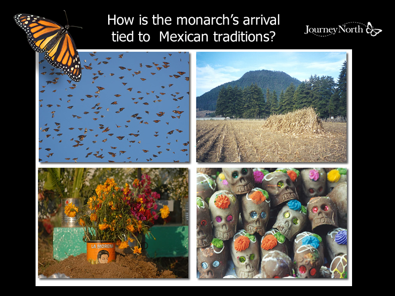 Monarch Arrival and Mexican Traditions