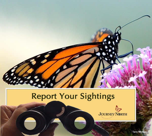 Report Your Monarch Observations