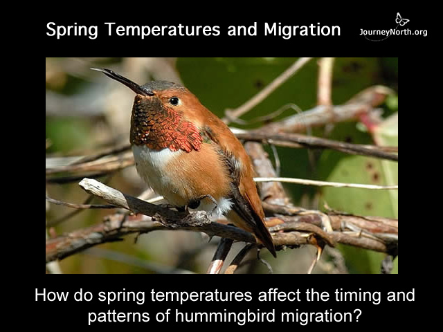 Journal Rufous Migration