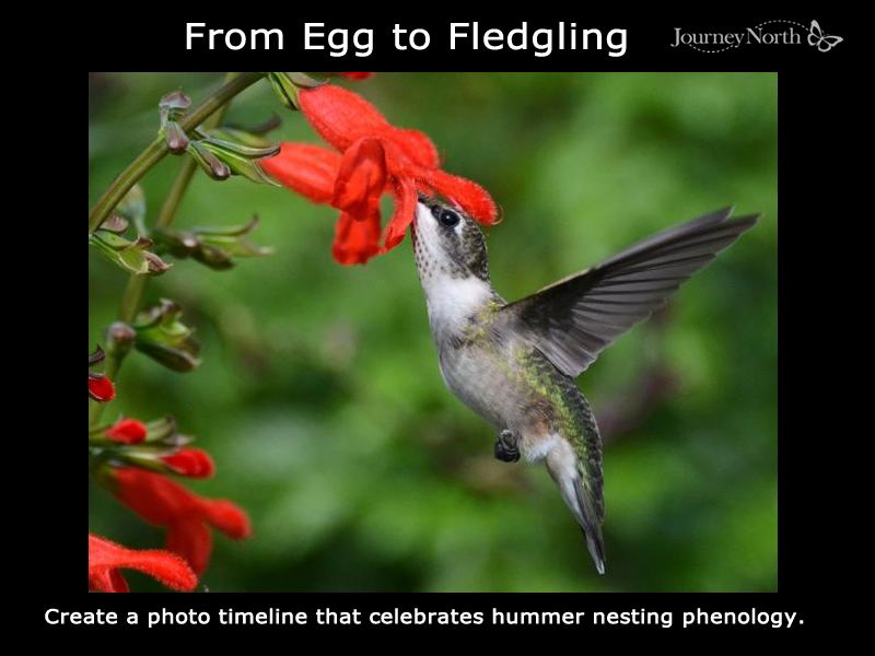 Hummer fledged from the nest.