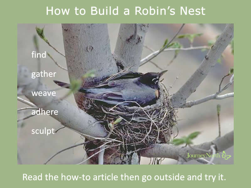 how to build a robins nest
