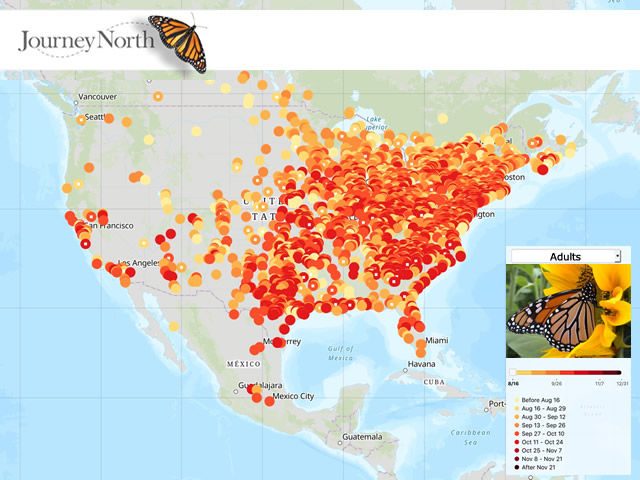 All Sightings: Map of Monarch Butterfly Migration Fall 2019