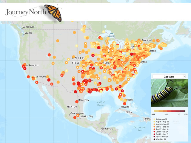 Map of Monarch Butterfly Eggs and Larvae Fall 2019