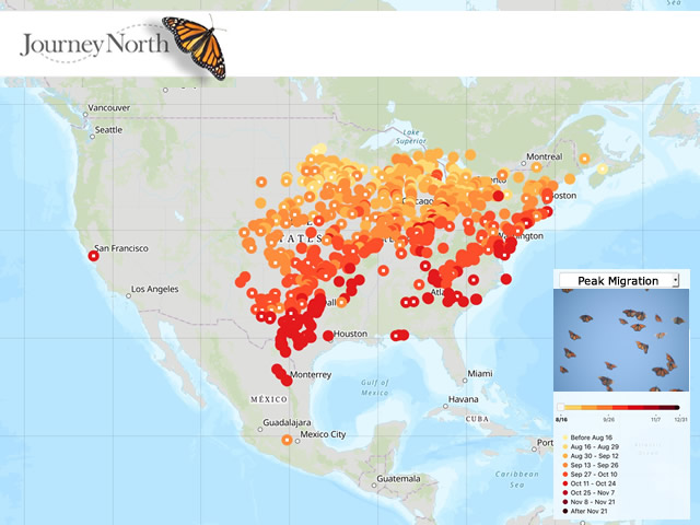 Map: Peak Monarch Butterfly Migration Fall 2019