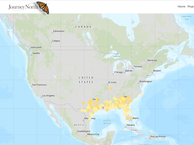 Ruby-throated Hummingbird Migration Map Spring 2020