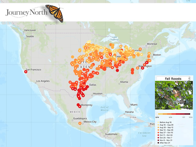 Map of Overnight Roosts in Monarch Butterfly Migration Fall 2020
