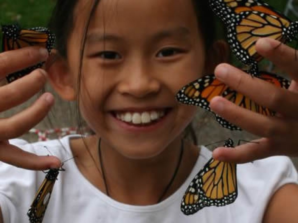 Thousands of citizen scientists across North America tag and release monarchs every fall. When a tagged butterfly is recovered, interesting discoveries can be made.