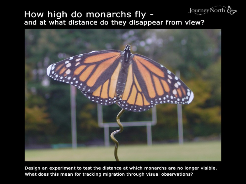 How High Do Monarchs Fly?
