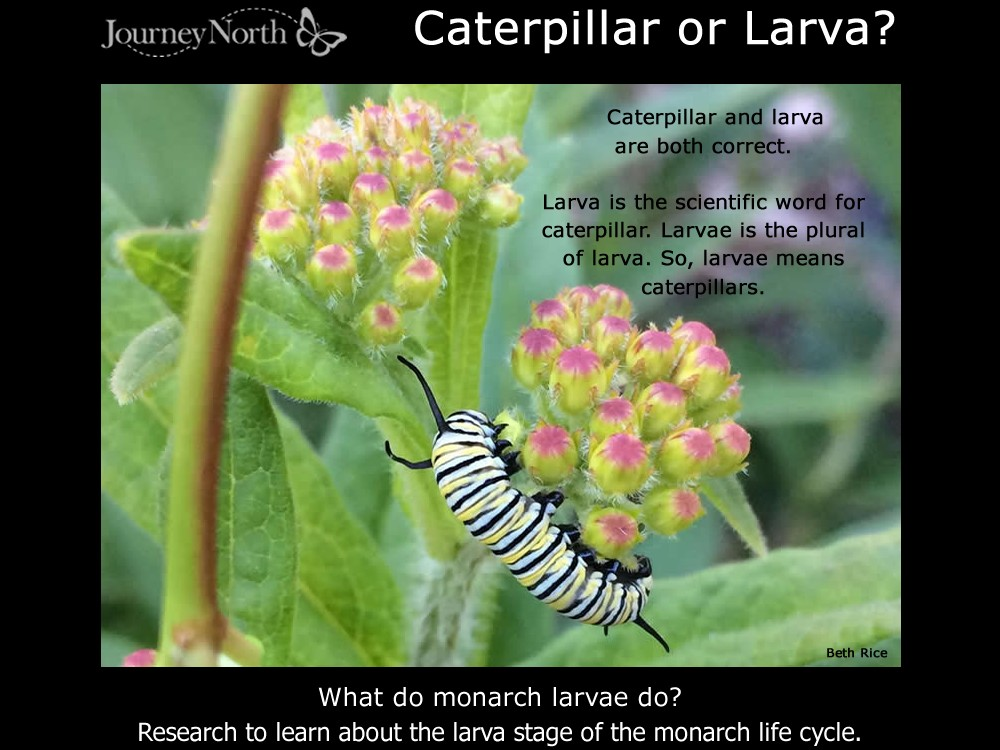 Journal Learn About the Larva