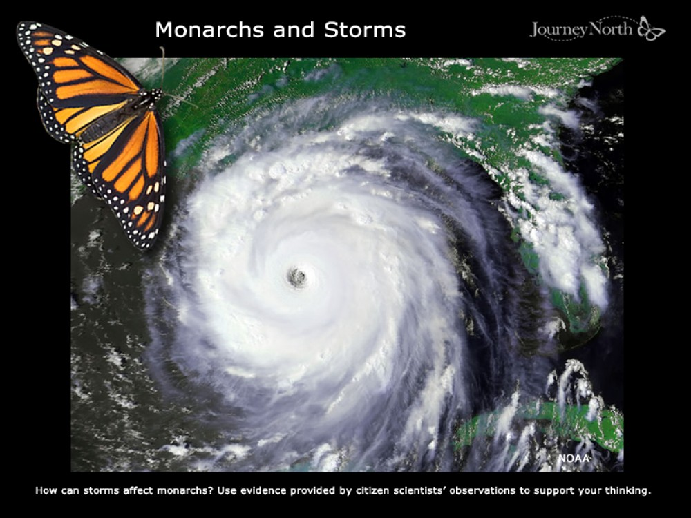 Monarchs and Storms