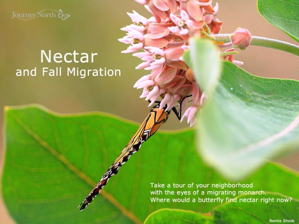 Nectar and Migration