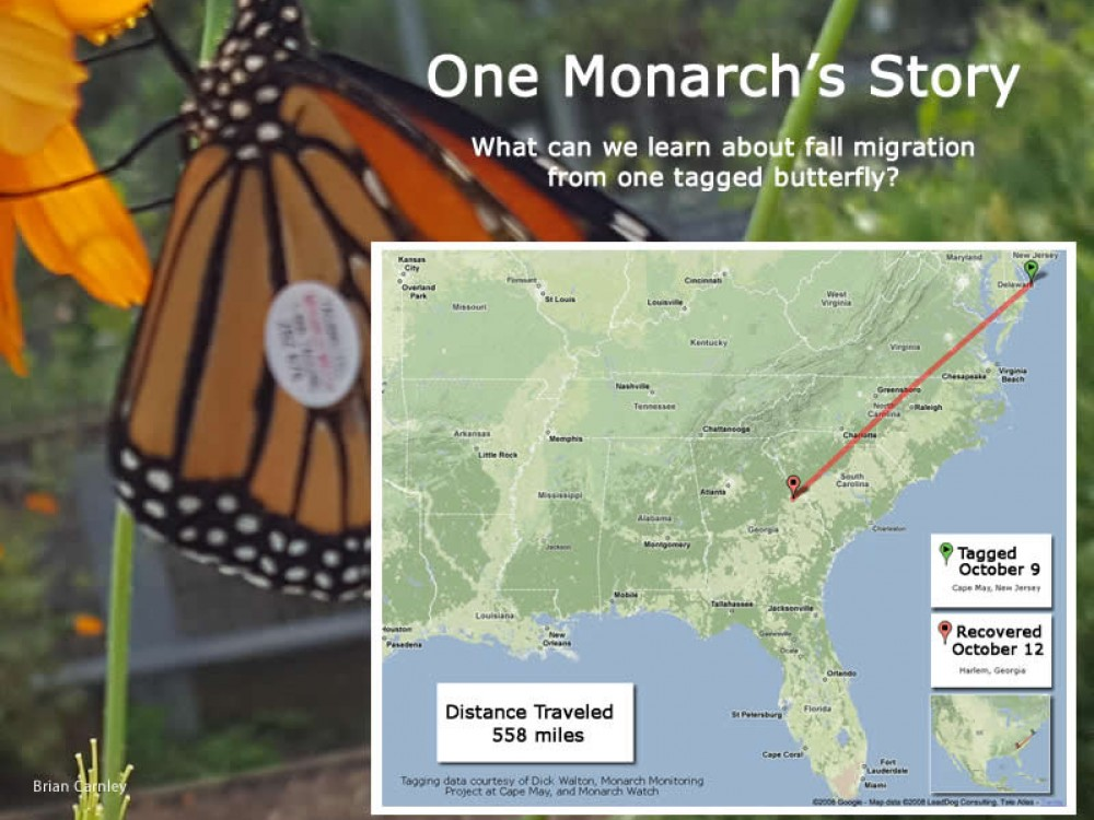 Journal: One Monarch's Story