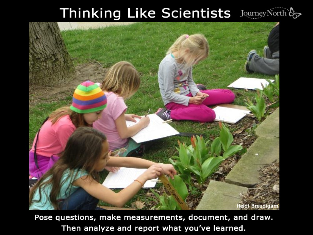 Observing and recording in the garden