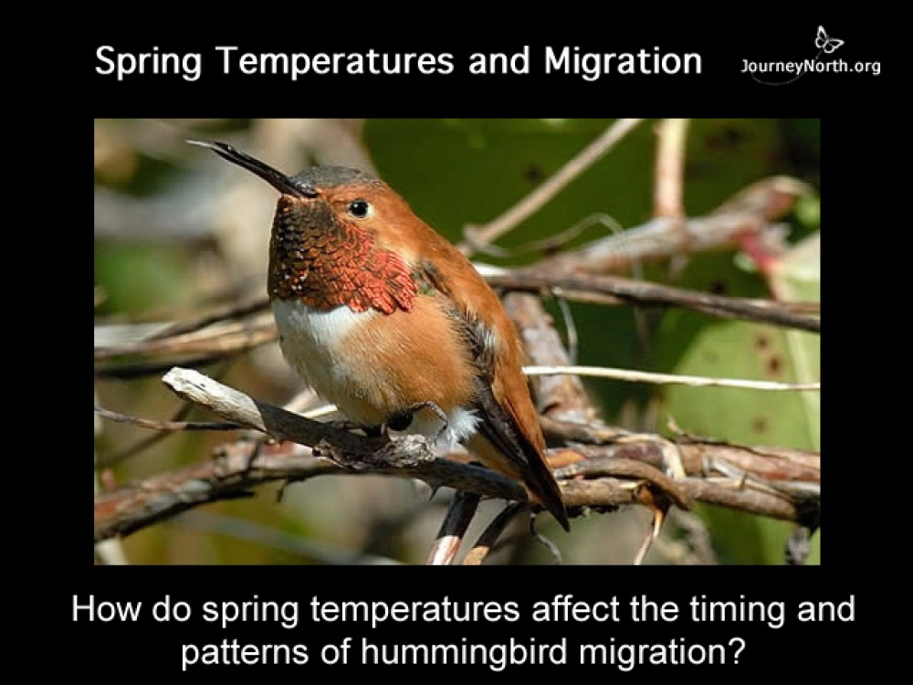 Migration and Weather
