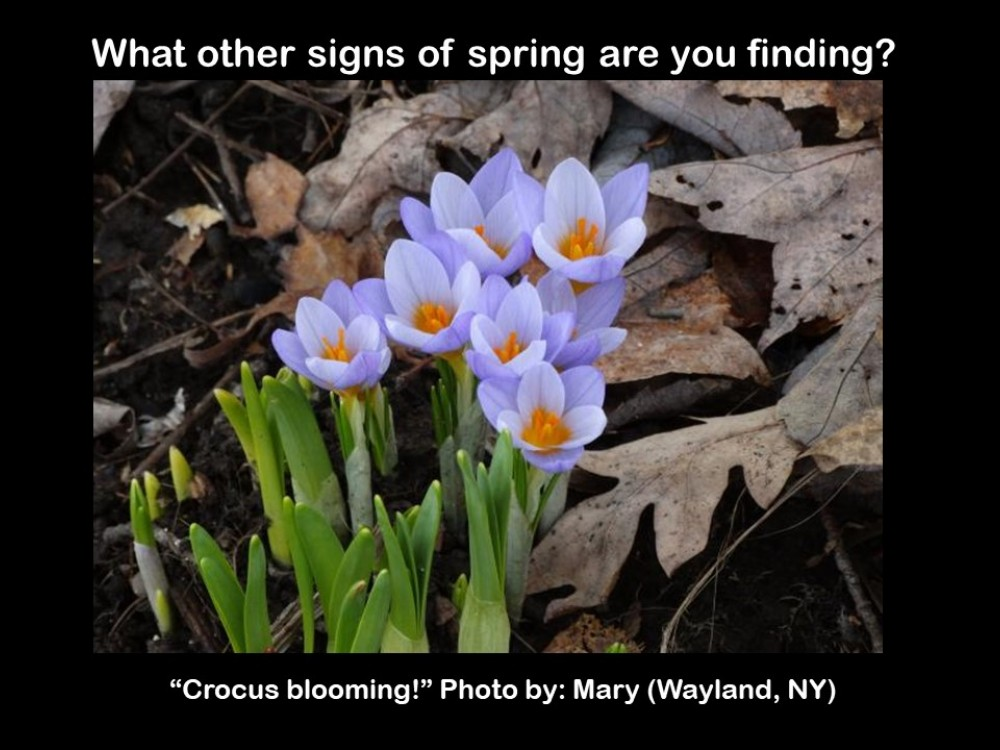 Signs of Spring 2019