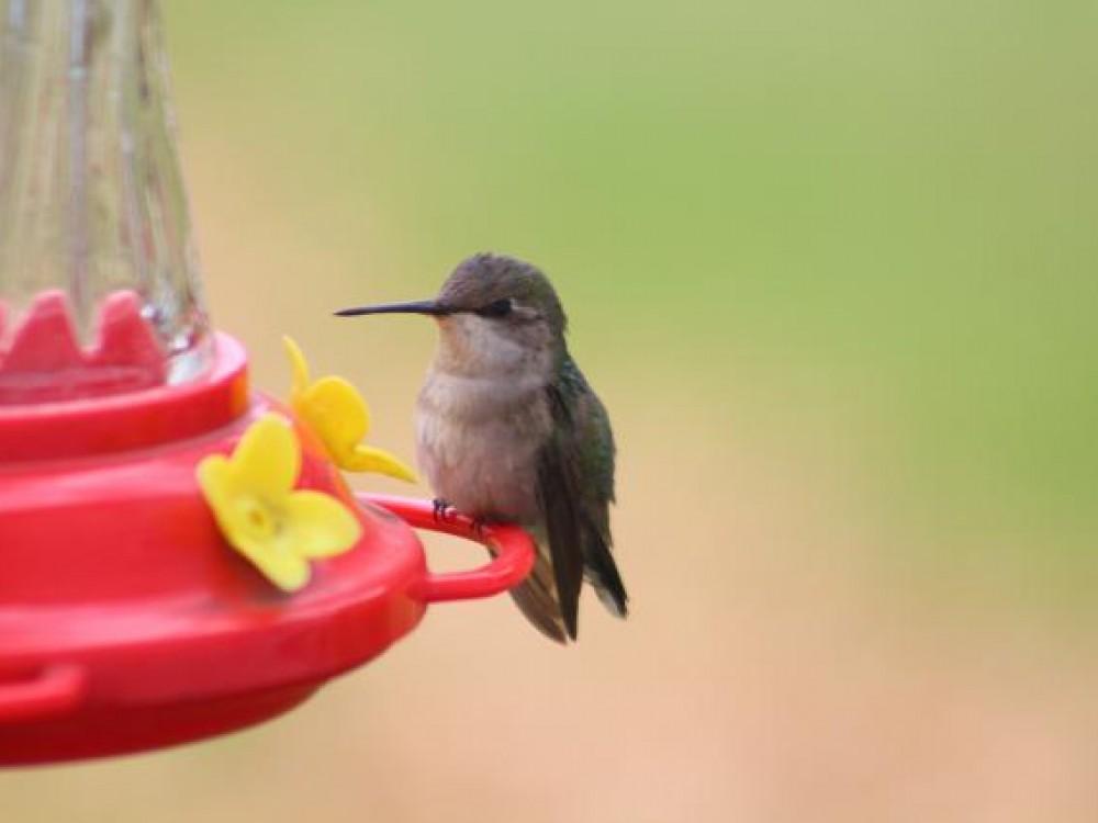 11 05 2019 A November Chill Yet Hummingbirds Remain