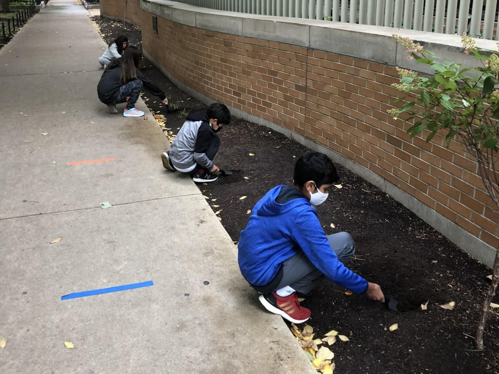 Students planting tulips in Chicago, IL.