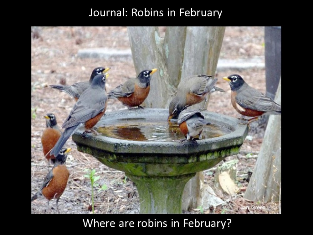 Journal: Robins in February
