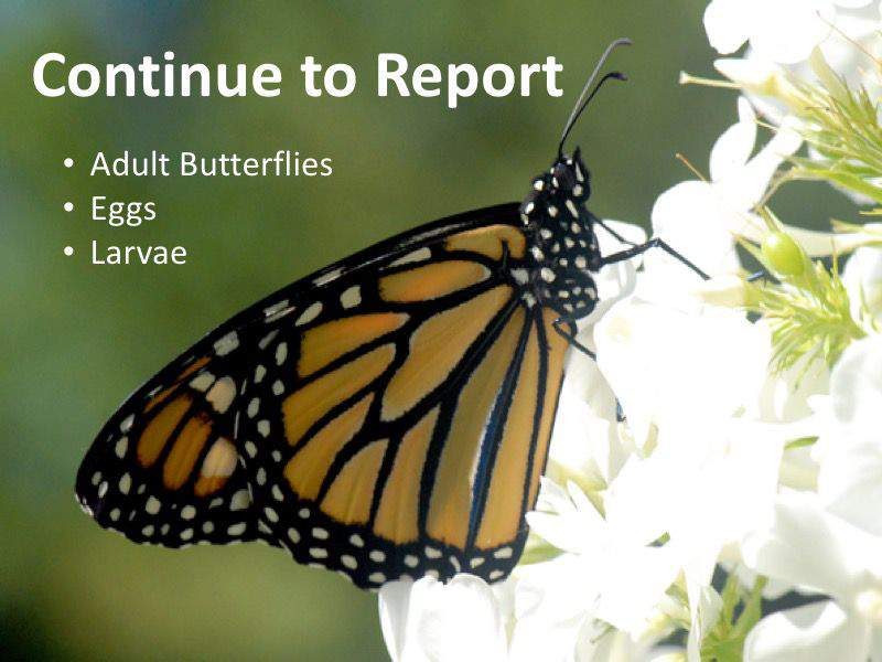 Continue to Report: Monarch Adults, Eggs and Larvae