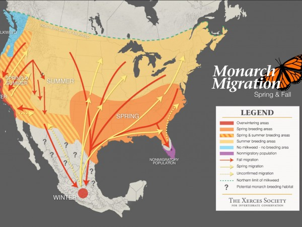 Map showing monarch butterfly migration