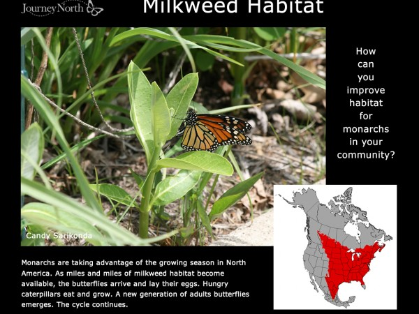 Journal: Milkweed Habitat