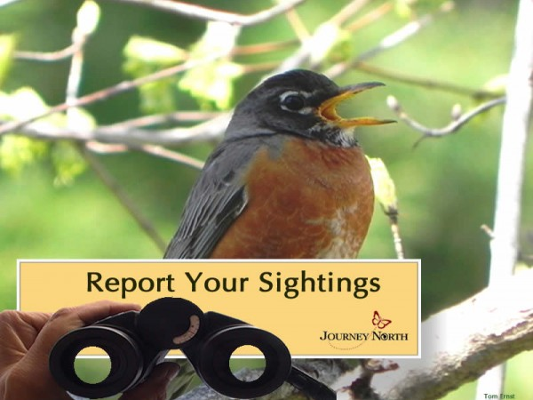 Image of robin and text report your sightings
