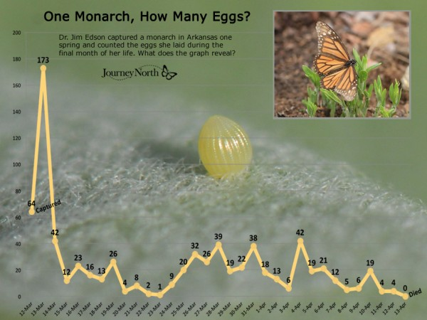 Graph showing how many eggs one monarch butterfly can lay