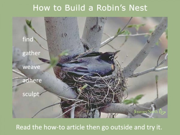 Infographic about how to build a robin's nest
