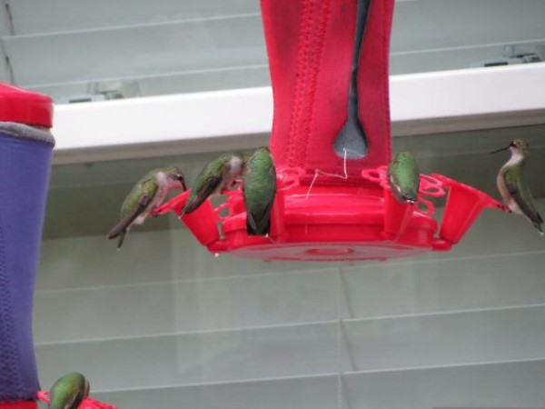 Photo of hummingbird feeder with cloth sleeve for warmth