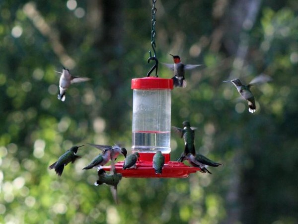 Image of many hummers around feeder by Scott Brega