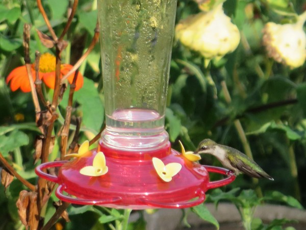 Photo of hummingbird at a feeder