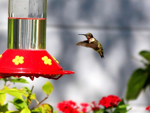 Photo of hummingbird feeder with clear nectar