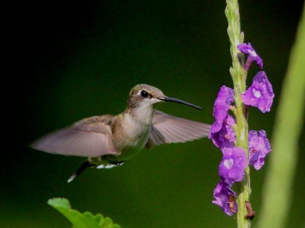 Photo of hummingbird in Costa Rica