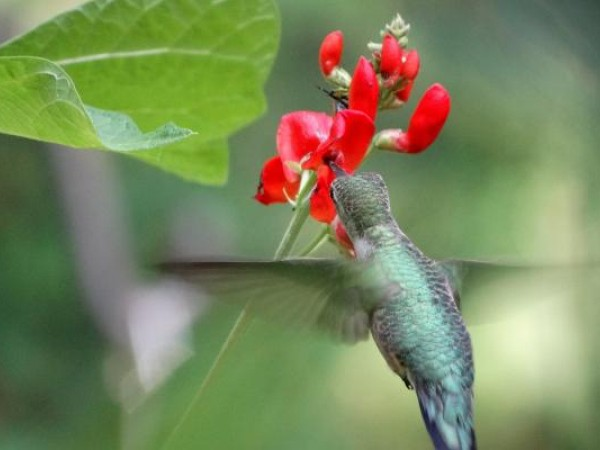 Photo of hummingbird nectaring at fall blooms