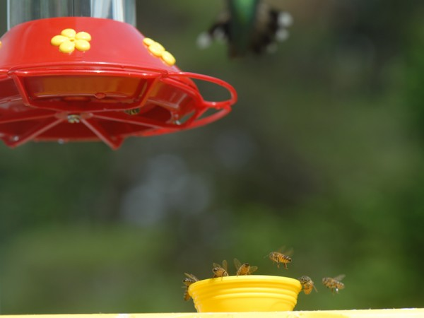 Photo of Detour Feeder for Bees