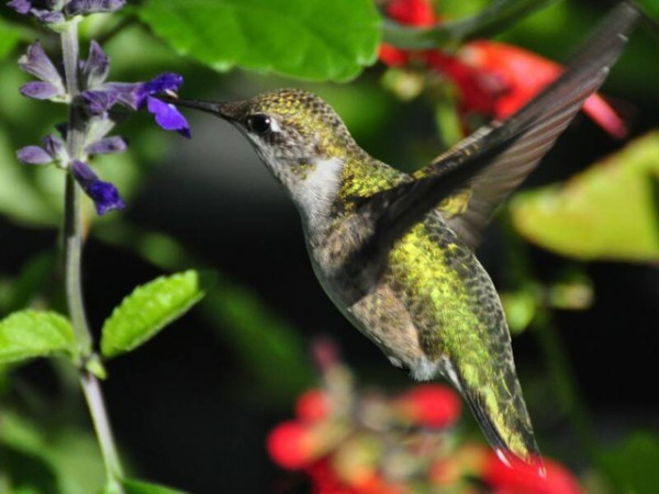 Image of hummingbird by Russ Thompson