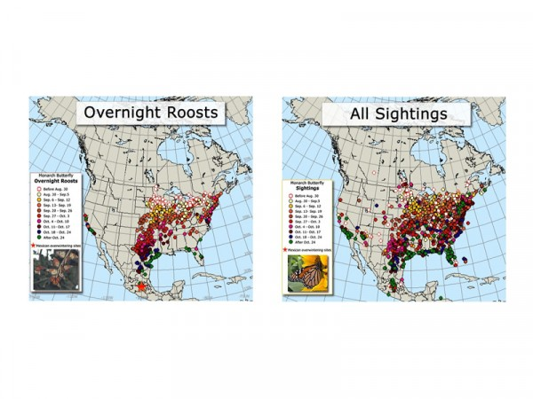 Comparative fall monarch butterfly migration maps