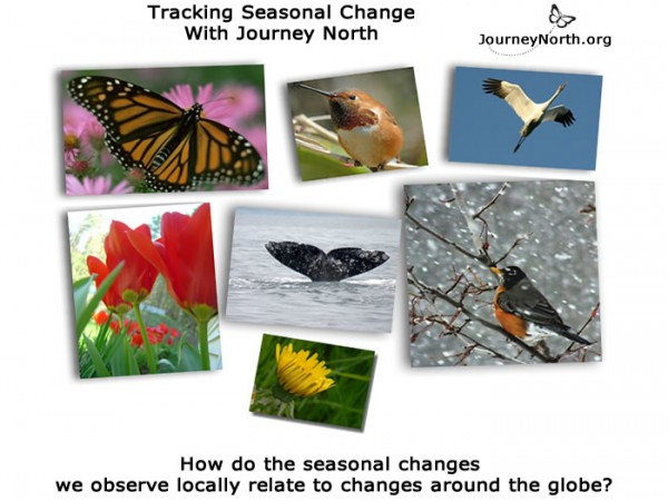 Infographic asking how do the seasonal changes we observe locally relate to changes around the globe?