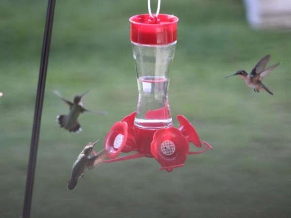 Hummingbirds at feeder by Gary Bielak