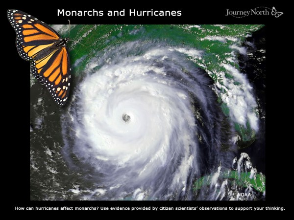 Monarchs and Hurricanes