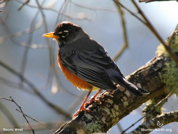 Earthworms and Robins Return