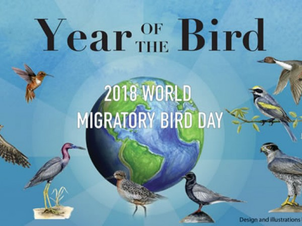 Year of the Bird: Geolocators, Paula Romero