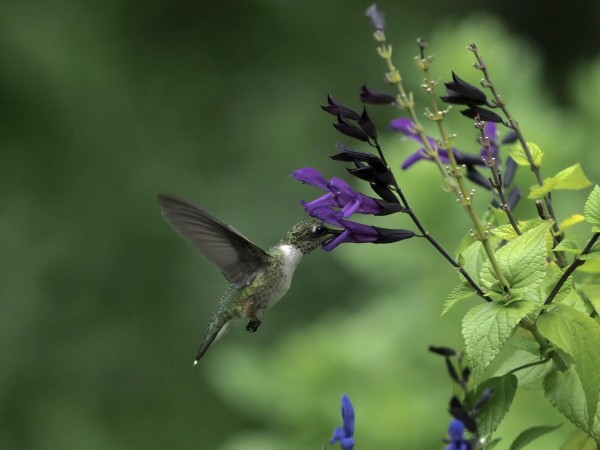 Image of hummingbird by Lee Levin-Friend
