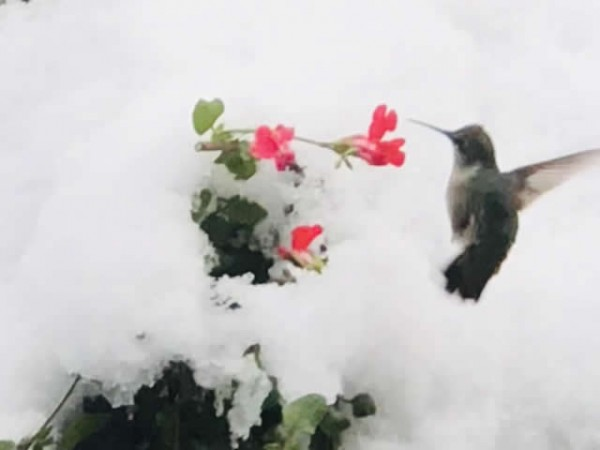 Image of hummingbird by Amy Widmeyer