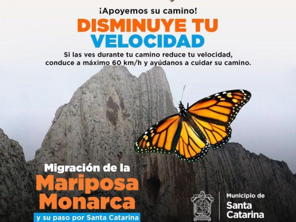 Road Sign in Mexico Slow Down for Monarchs