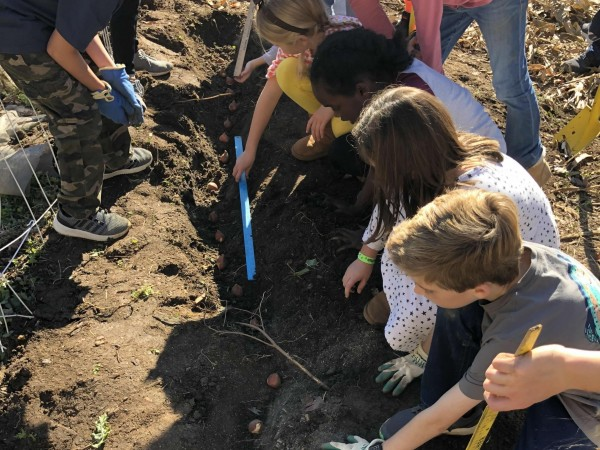 Students plant a Journey North garden in Greensboro, North Carolina